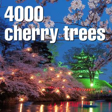 4000 cherry trees